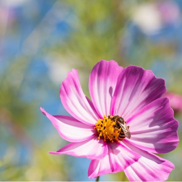 C'est le printemps, la pollinisation des abeilles commence et est indispensable à notre société pour se développer durablement