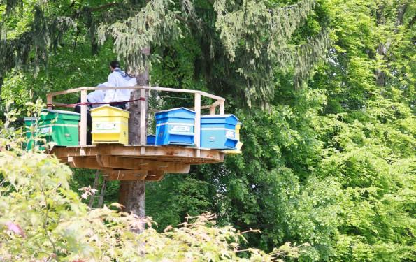 Ruches des Trésoms - Annecy. Démarche environnementale et collaborative autour des abeilles