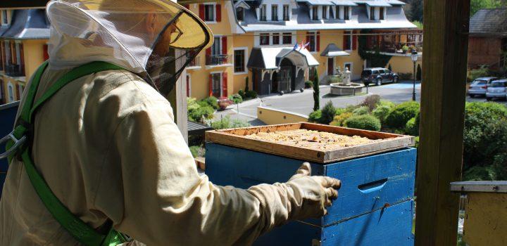 Le Rucher des Trésoms : bee friendly